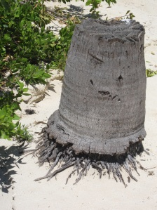 This is a tree stump?