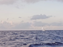 Adjusting sail trim